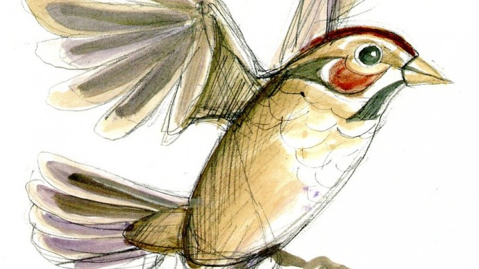Sparrow puppet sketch by David Fichter.